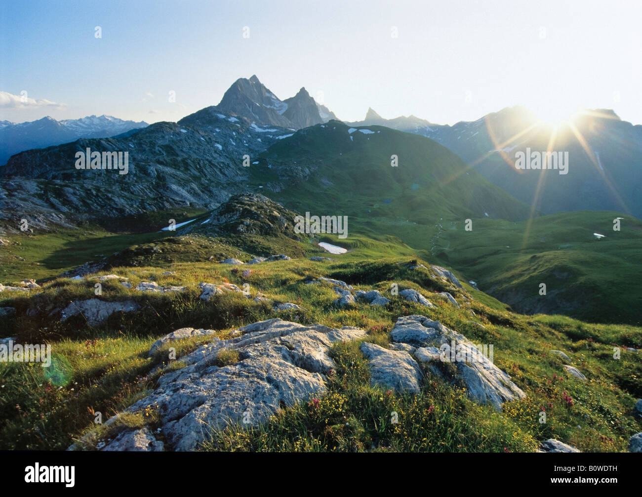 Mountain meadow, Lechtal Alps, Tyrol, Austria, Europe - Stock Image