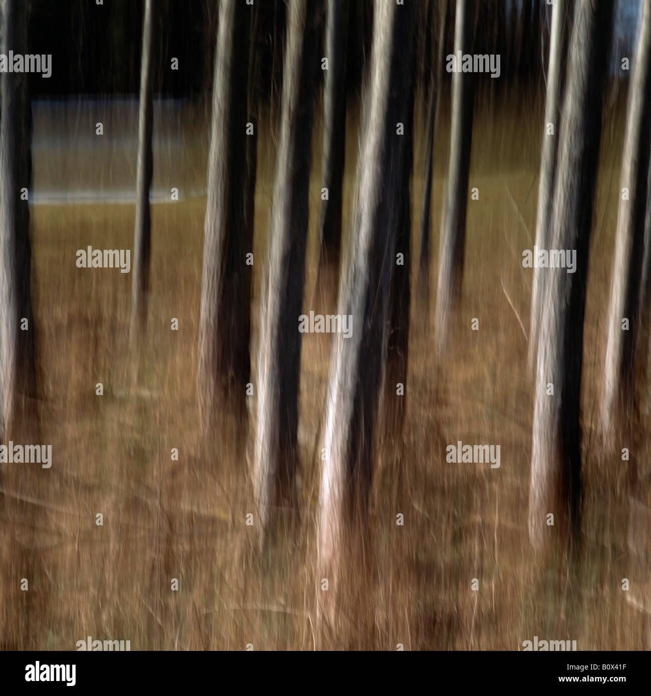 Tree trunks, Upper Austria, Austria - Stock Image