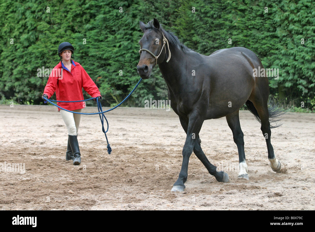 Lunging the adult rider book ready
