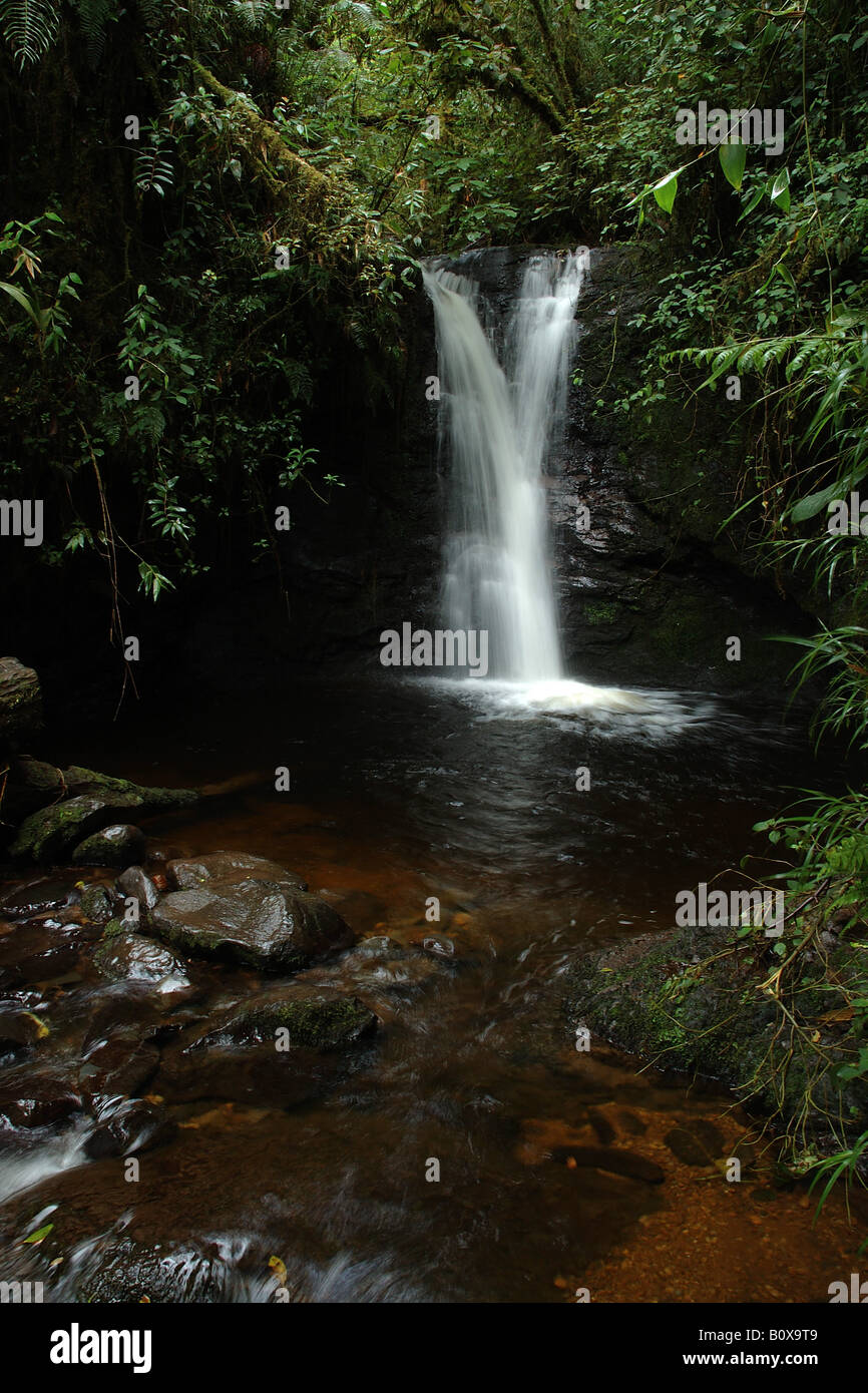 brook clouded forest bromeliacee epiphitic plants stream Cerro de la Muerte Costarica rain forest foresta pluviale Stock Photo