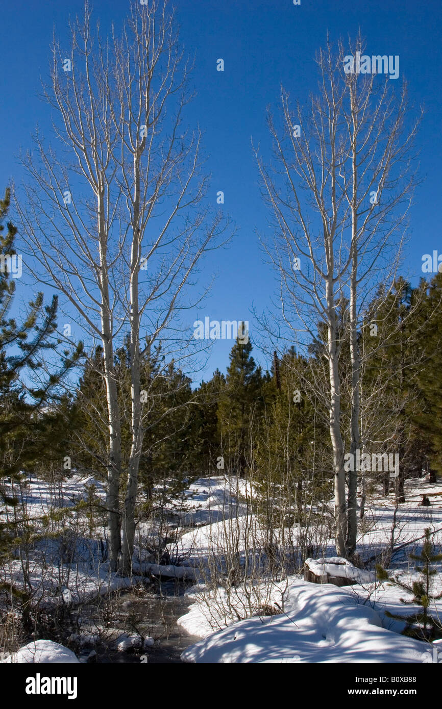 WINTER LANDSCAPE in the Deschutes National Forest near Three creeks lake Road, USA, Oregon Stock Photo