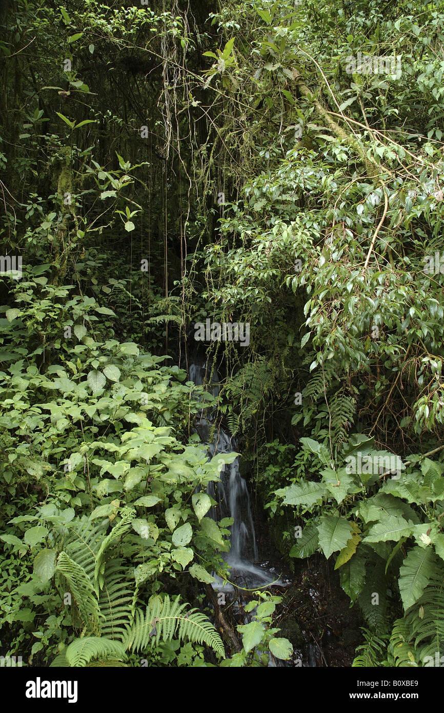 ruscello Costarica rain forest foresta pluviale foresta tropicale foresta tropicale montana Stock Photo