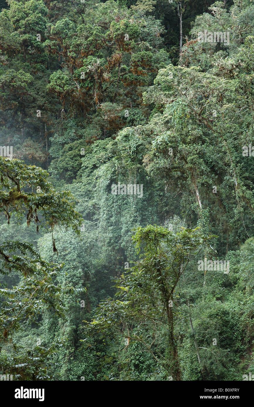 Costarica rain forest foresta pluviale foresta tropicale foresta tropicale montana foresta nebulare Stock Photo