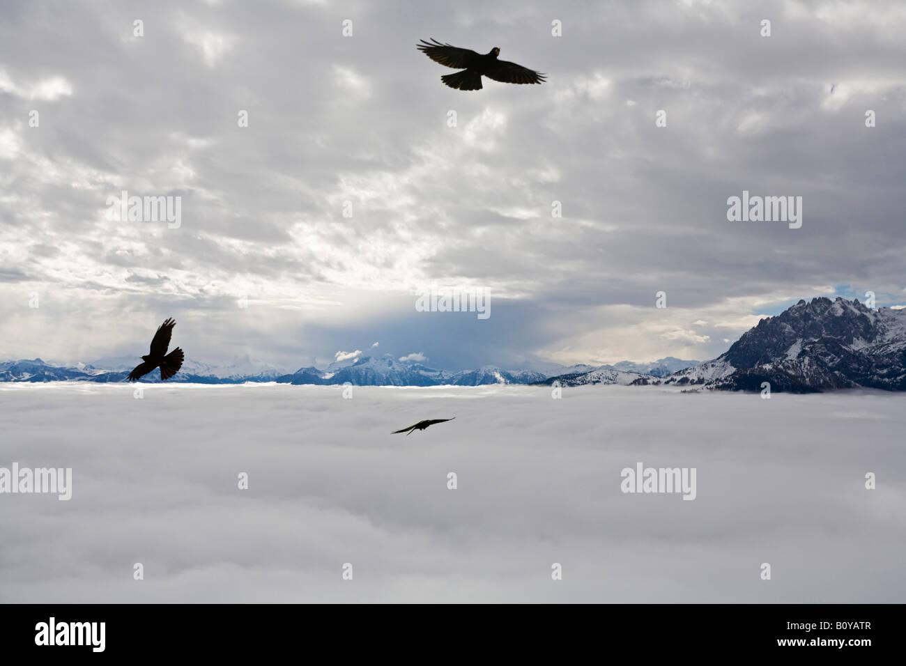 Austria, Werfen, Eisriesenwelt, Eagles in flight - Stock Image