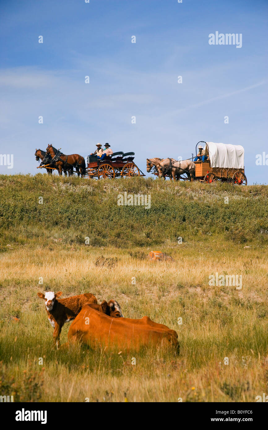 Traveling by horse and carriage - Stock Image
