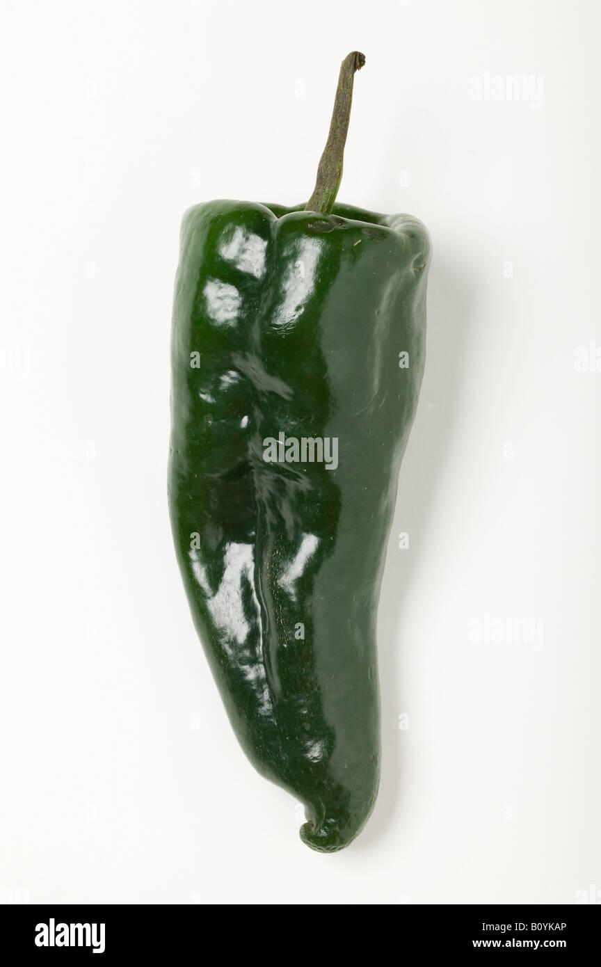 Poblano chili pepper Stock Photo