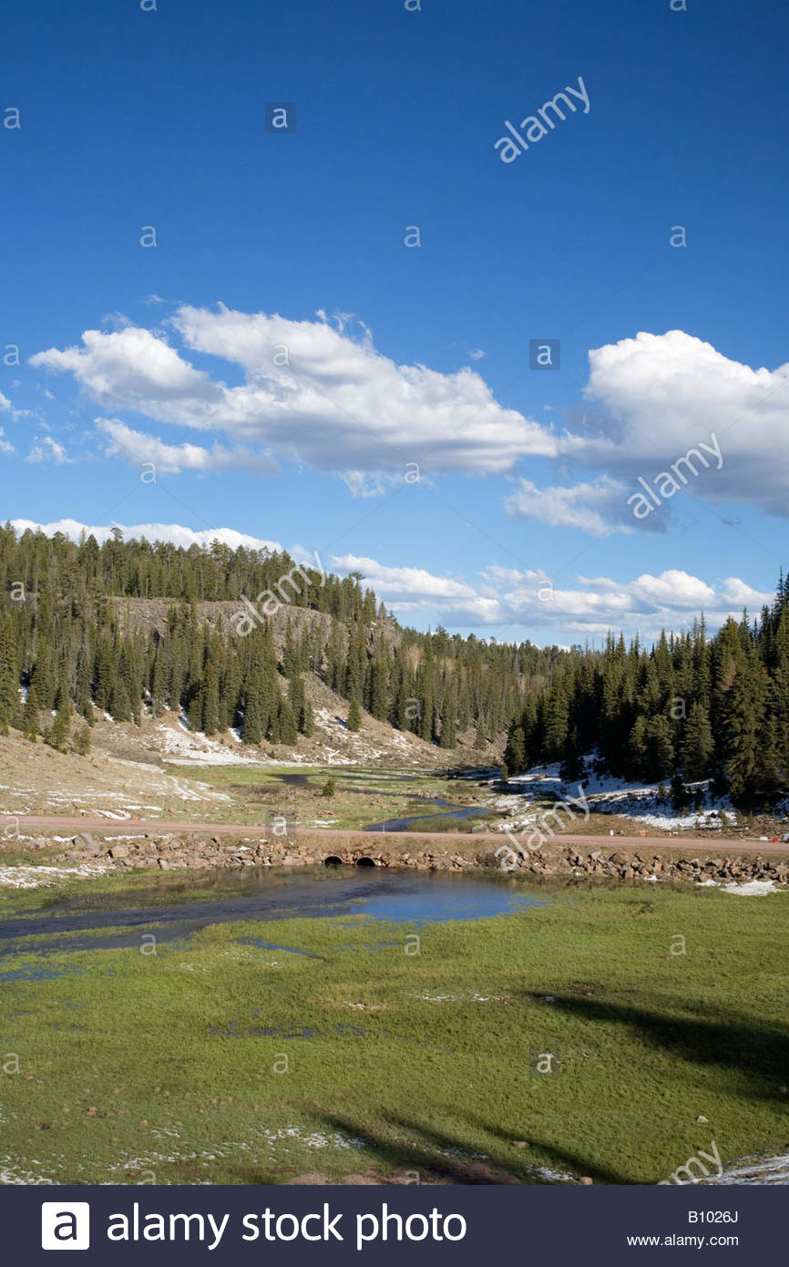 West Fork Black River Apache National Forest FR 116 snow trees mountain stream creek - Stock Image