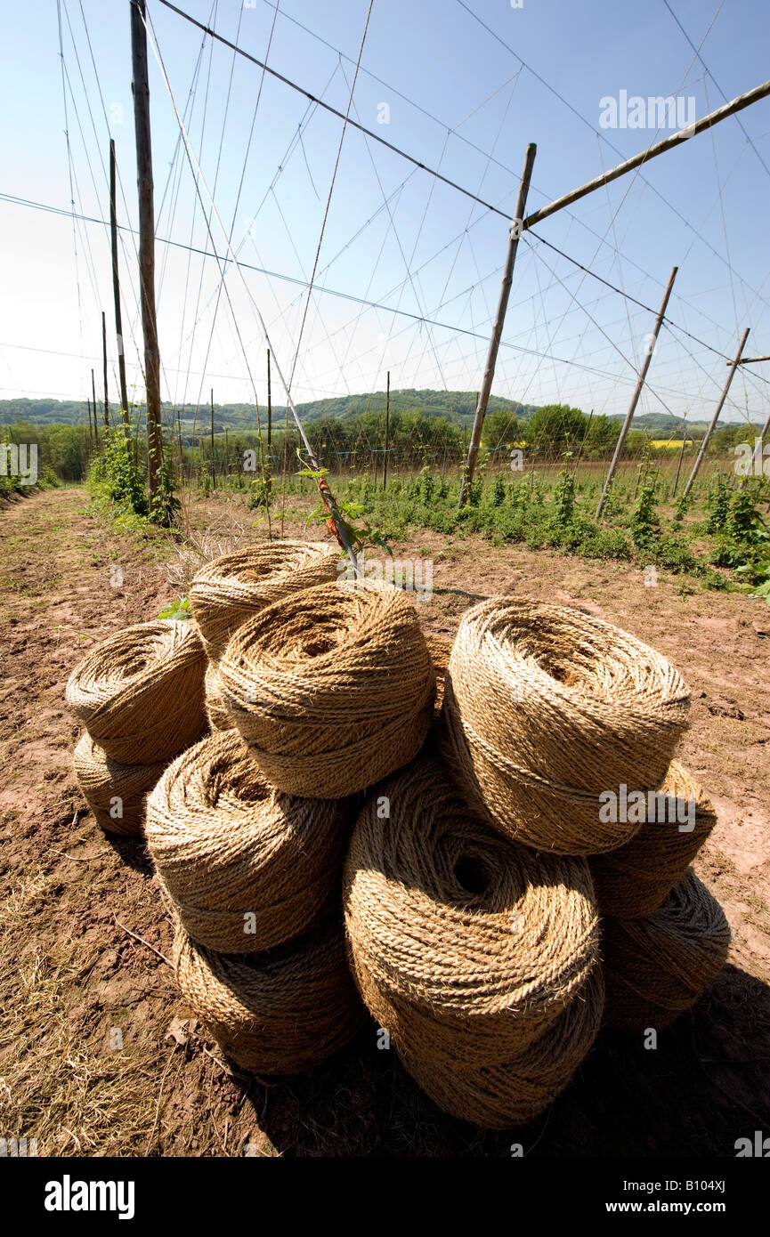 String for tying Hop bines piled high in the small village of Cleobury Mortimer in South Shropshire with Trellis - Stock Image