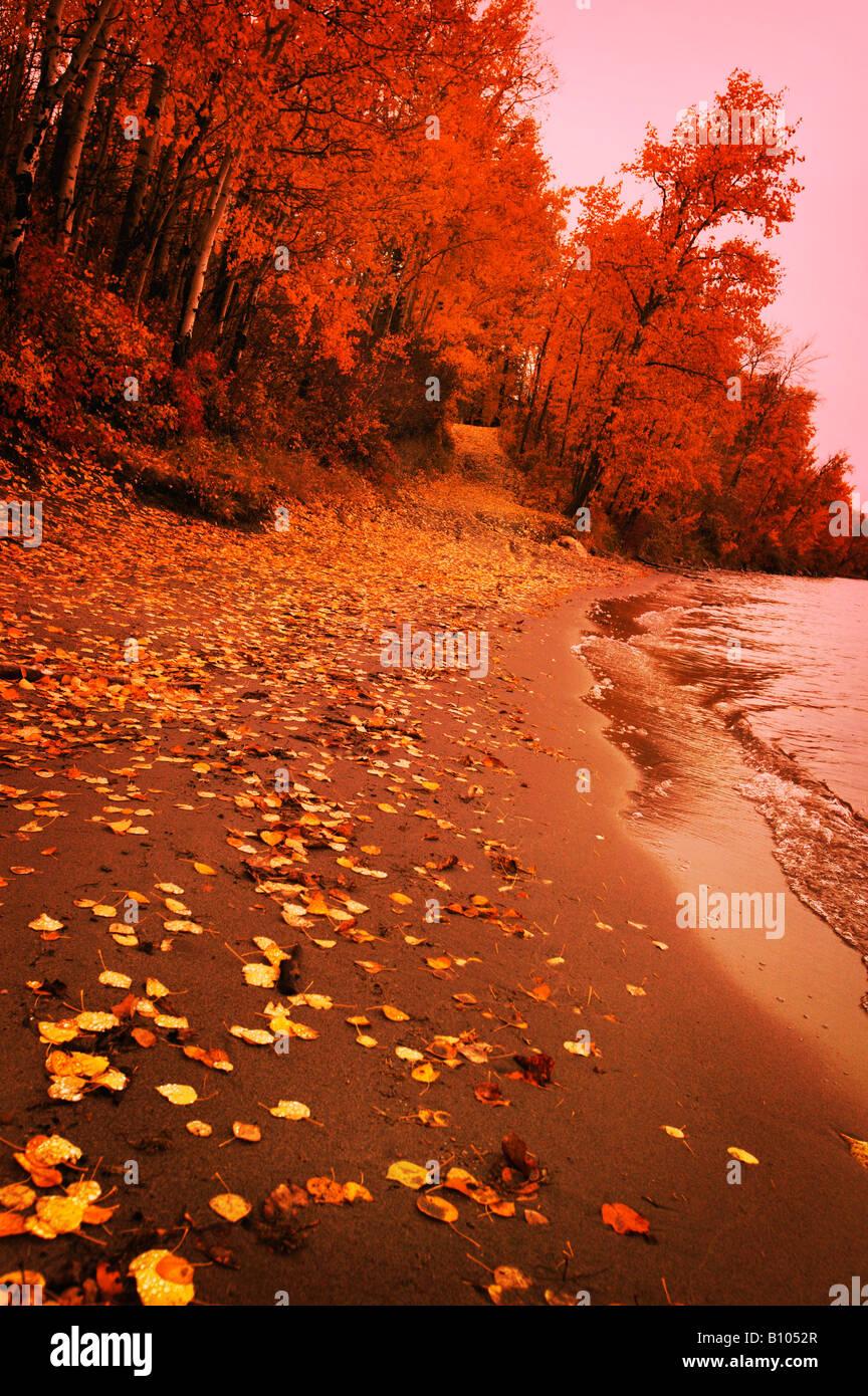 Autumn shoreline - Stock Image