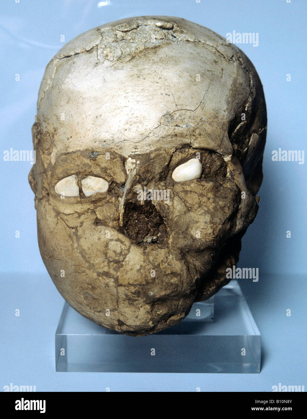 Neolithic plastered skull with shell eyes 7000 BC Jericho - Stock Image