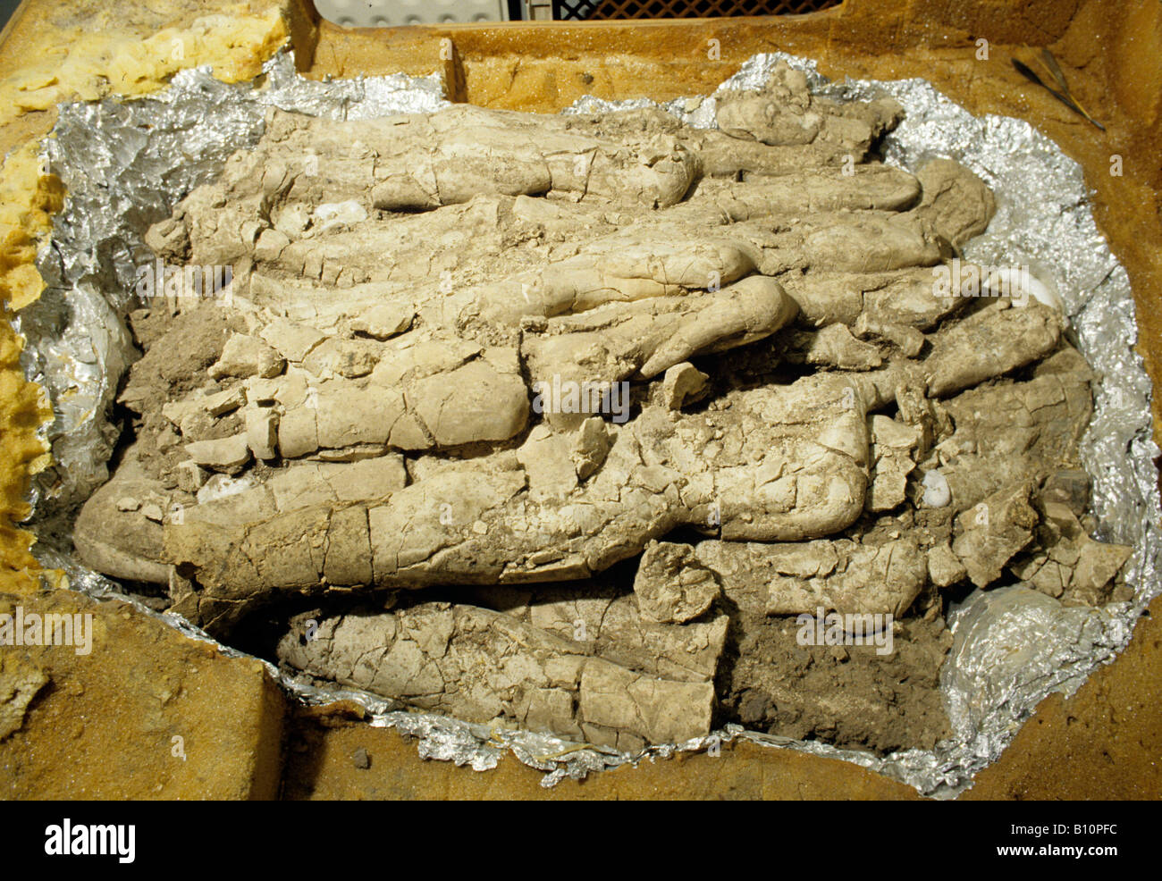Compacted Stone Age statues as found in Amman 6000 BC Jordan - Stock Image