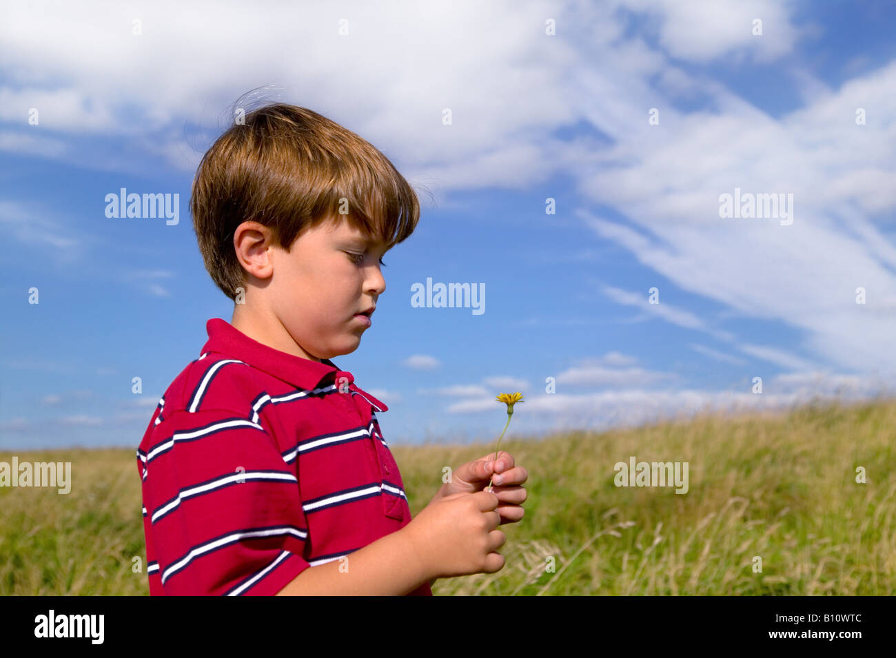 A young boy in a red shirt looking at a flower he s picked in a meadow on a bright sunny day - Stock Image