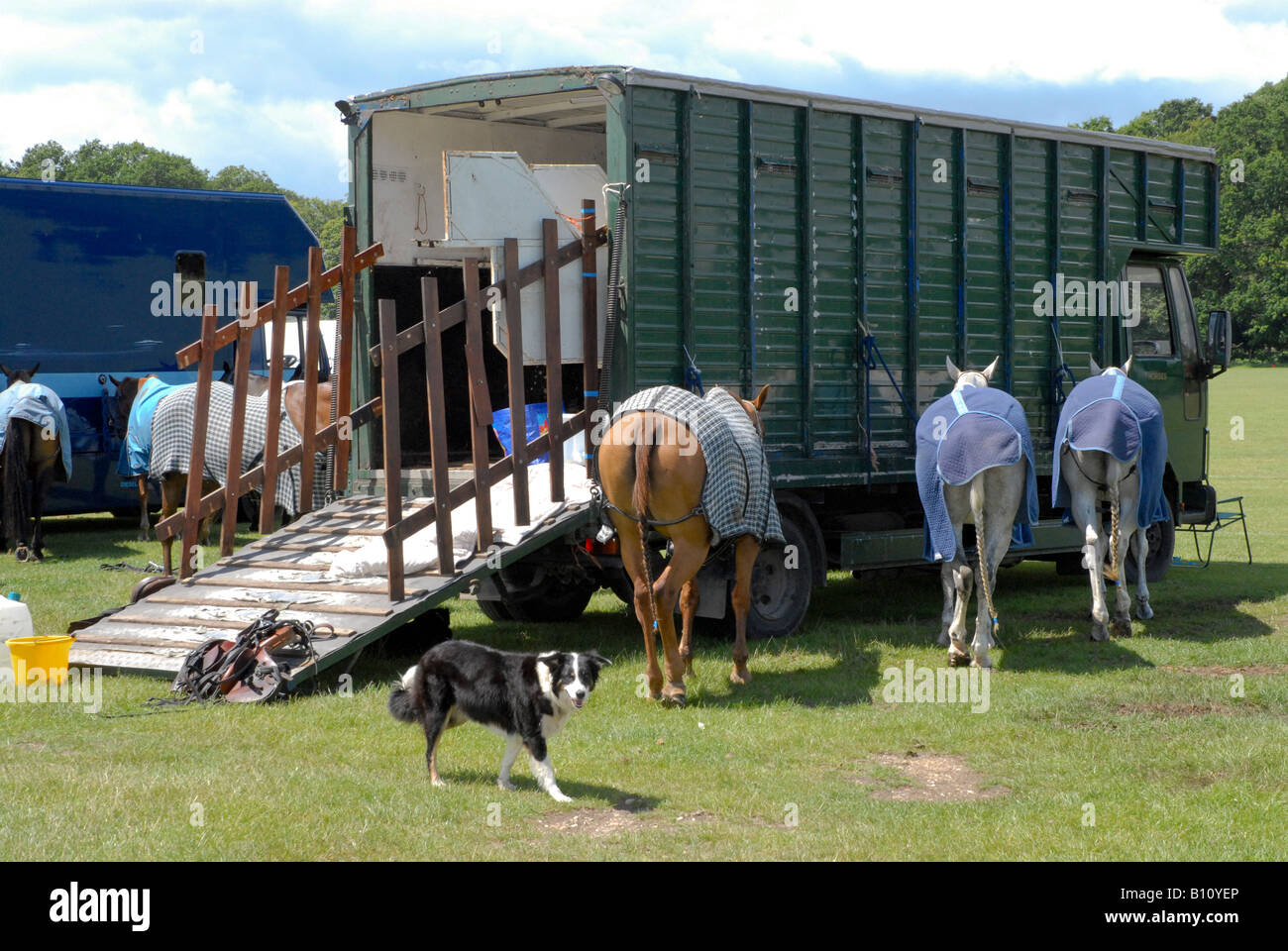 Polo ponies in horse blankets tied up by he horse van before the meeting with dog - Stock Image