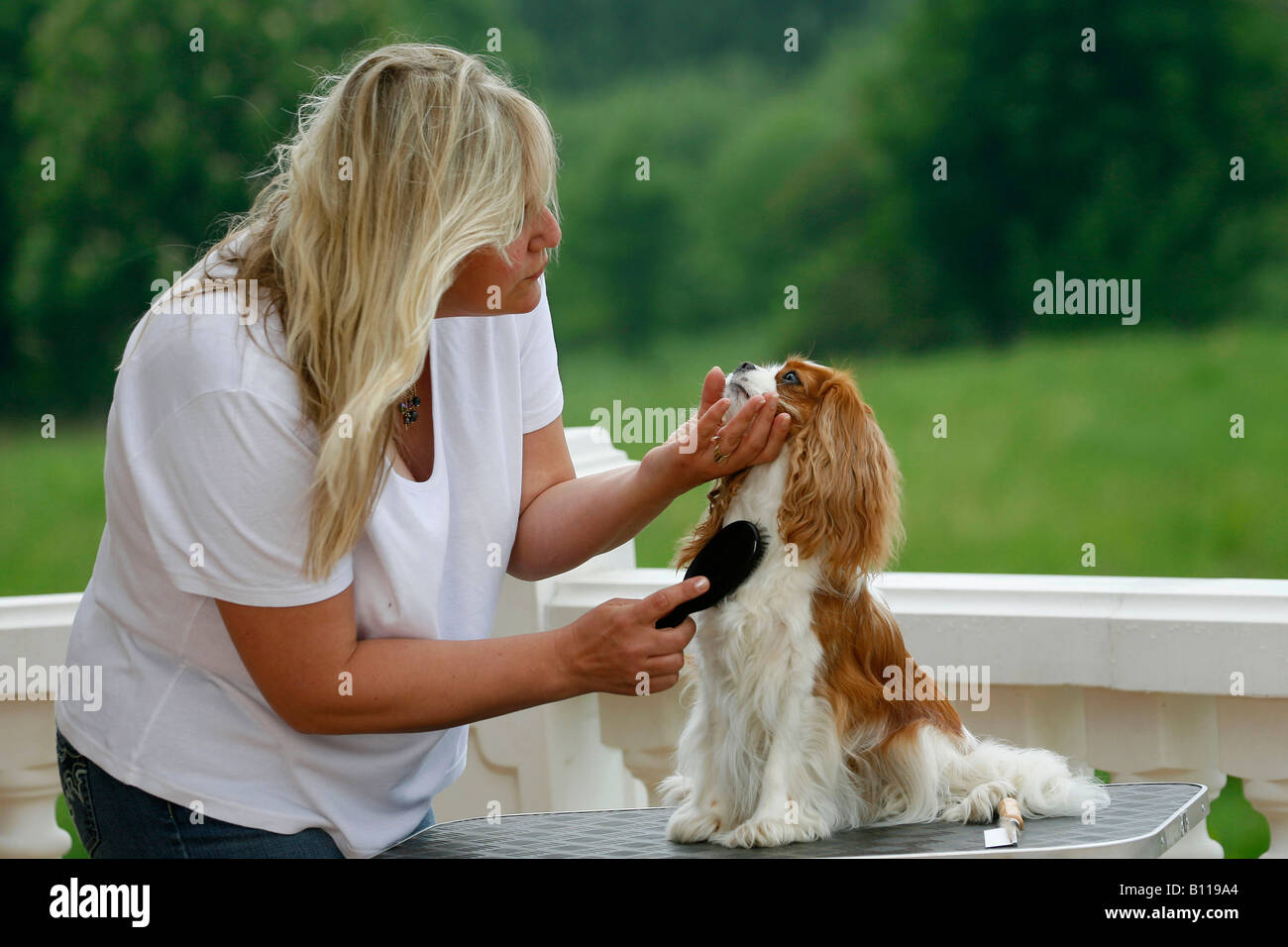 Woman With Cavalier King Charles Spaniel Stock Photos Woman With