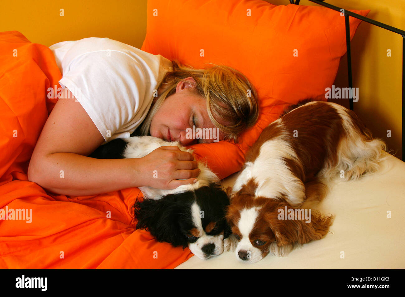 Woman and Cavalier King Charles Spaniel in bed - Stock Image