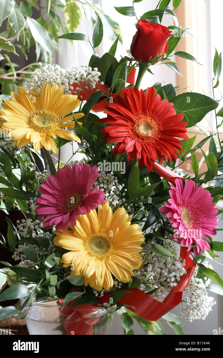 A red, yellow and pink gerbera flower bouquet. - Stock Image