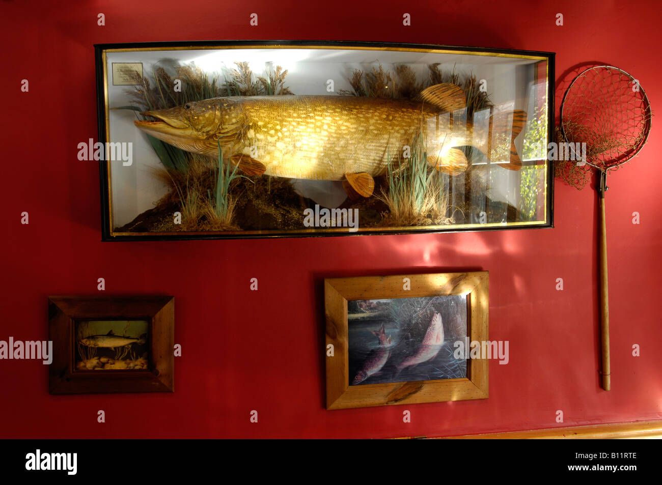 Angling memorabilia on a pub wall England UK Royal Oak Inn Luxborough Somerset. - Stock Image