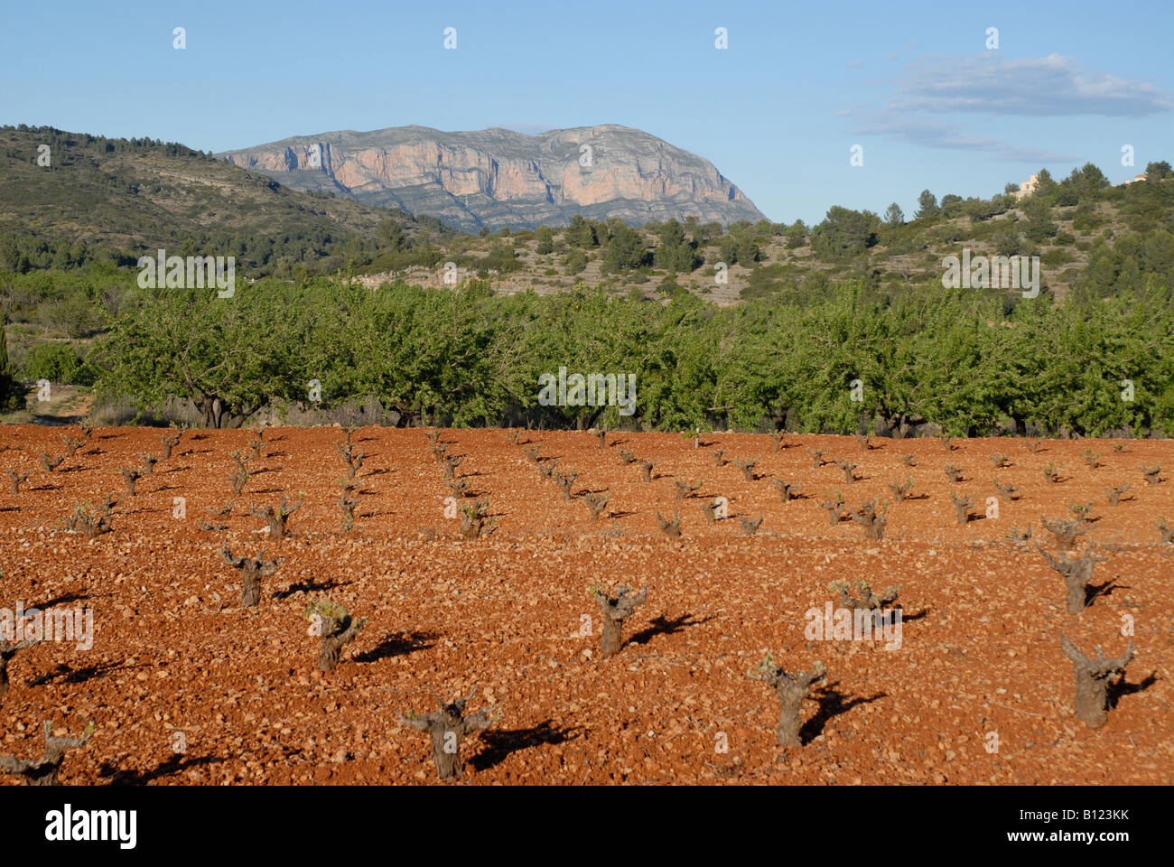 view to Montgo mountain & vineyard in early spring, Jalon Valley, Alicante Province, Comunidad Valenciana, Spain - Stock Image