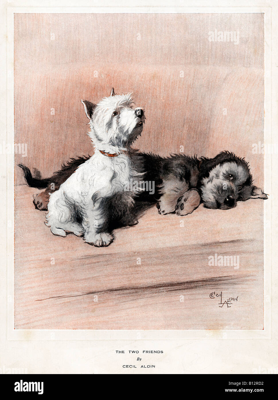 Two Friends 1920s illustration of a couple of dogs by the famous animal illustrator Cecil Aldin - Stock Image