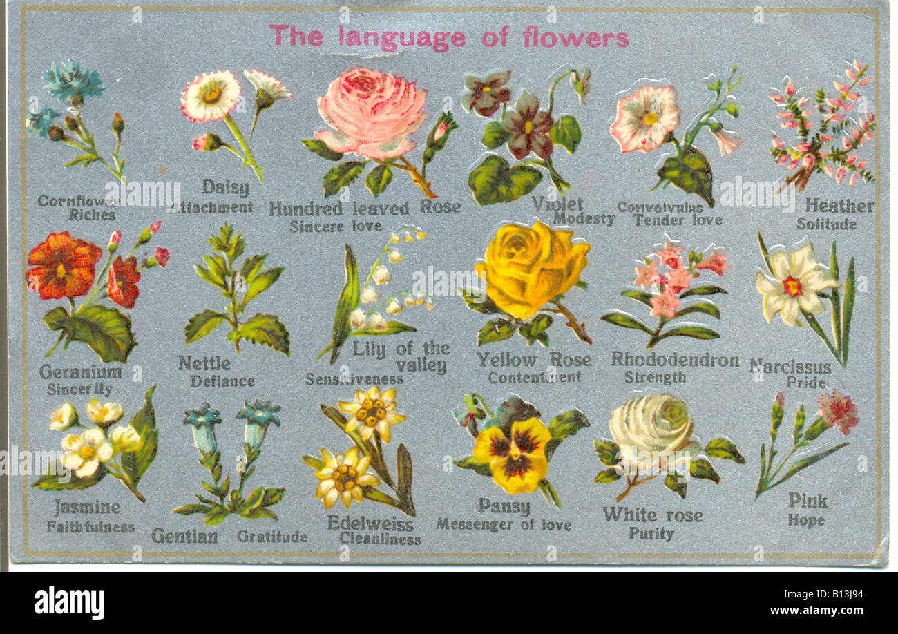 Language Of Flowers Stock Photos Language Of Flowers Stock Images