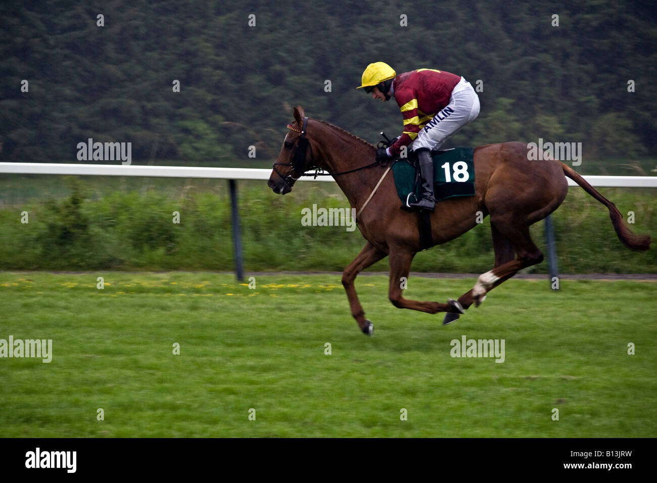Horse and jockey warming up before The Gold Cup Steeplechase at Scone Palace Park Racecourse Perth,UK Stock Photo