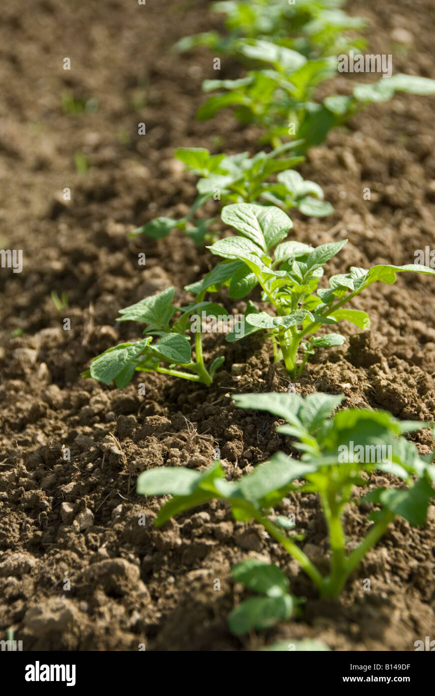Starting A Vegetable Garden Stock Photos & Starting A Vegetable ...