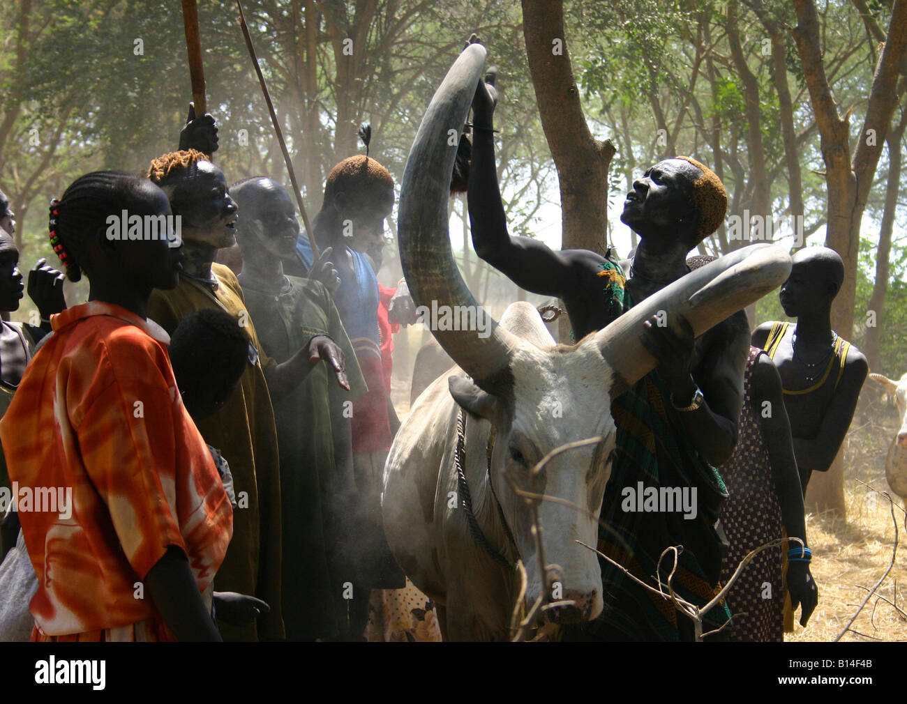 Photo of a group of Dinka with a prized cow. The people gather around the cow, proudly showing me its specially - Stock Image