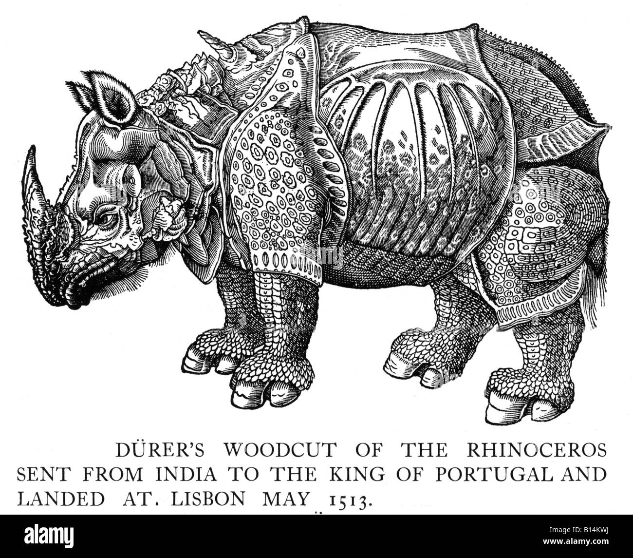 Rhinoceros Durers woodcut of the Rhinoceros from India landed at Lisbon 1513 engraved from a sketch sent to the - Stock Image