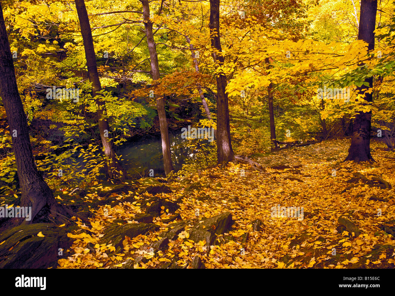 Painet js0792 fall foliage in new york botanical garden bronx ny ...