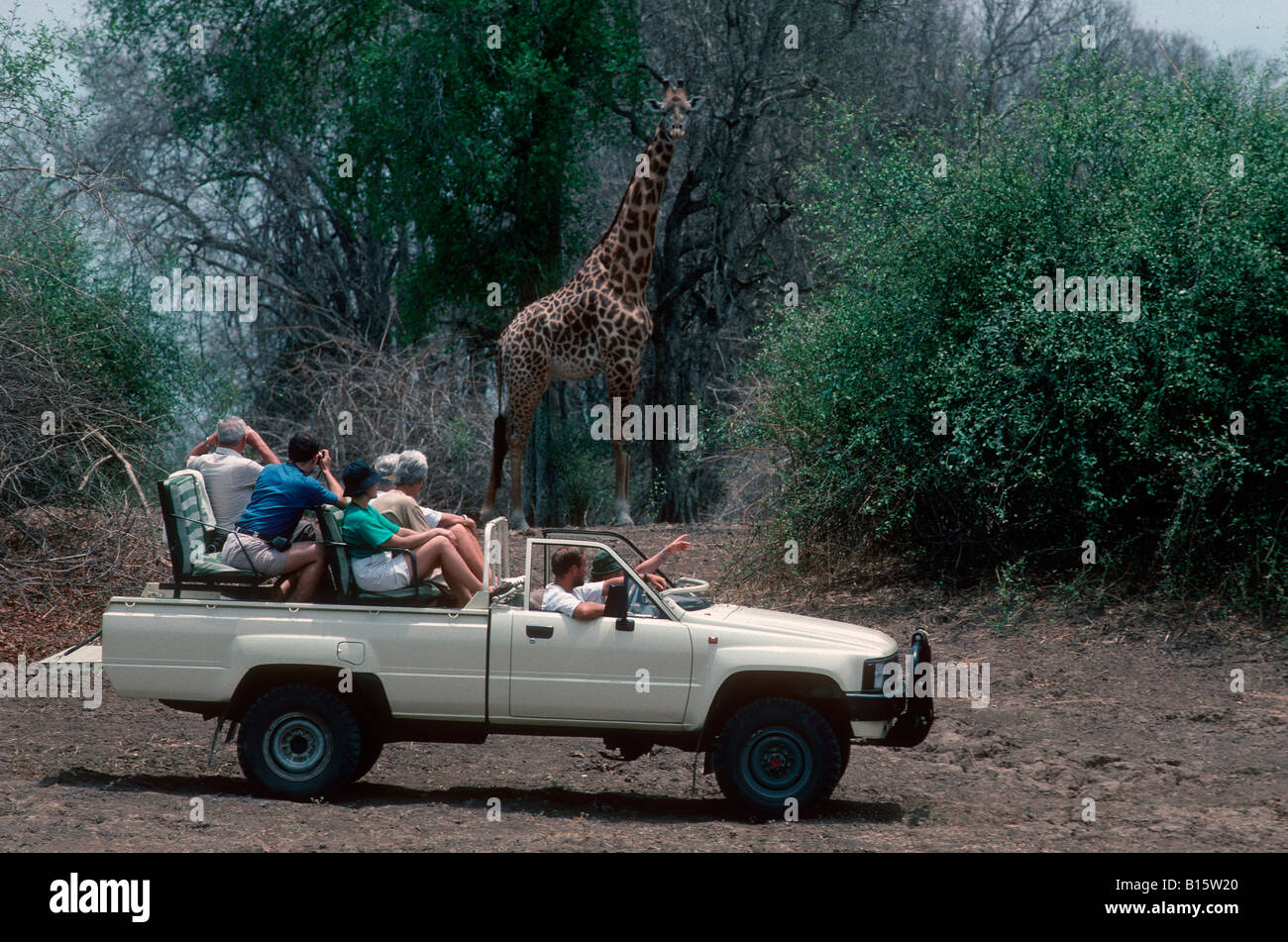 Tourists in open vehicle game viewing giraffe South Luangwa National Park Zambia Stock Photo