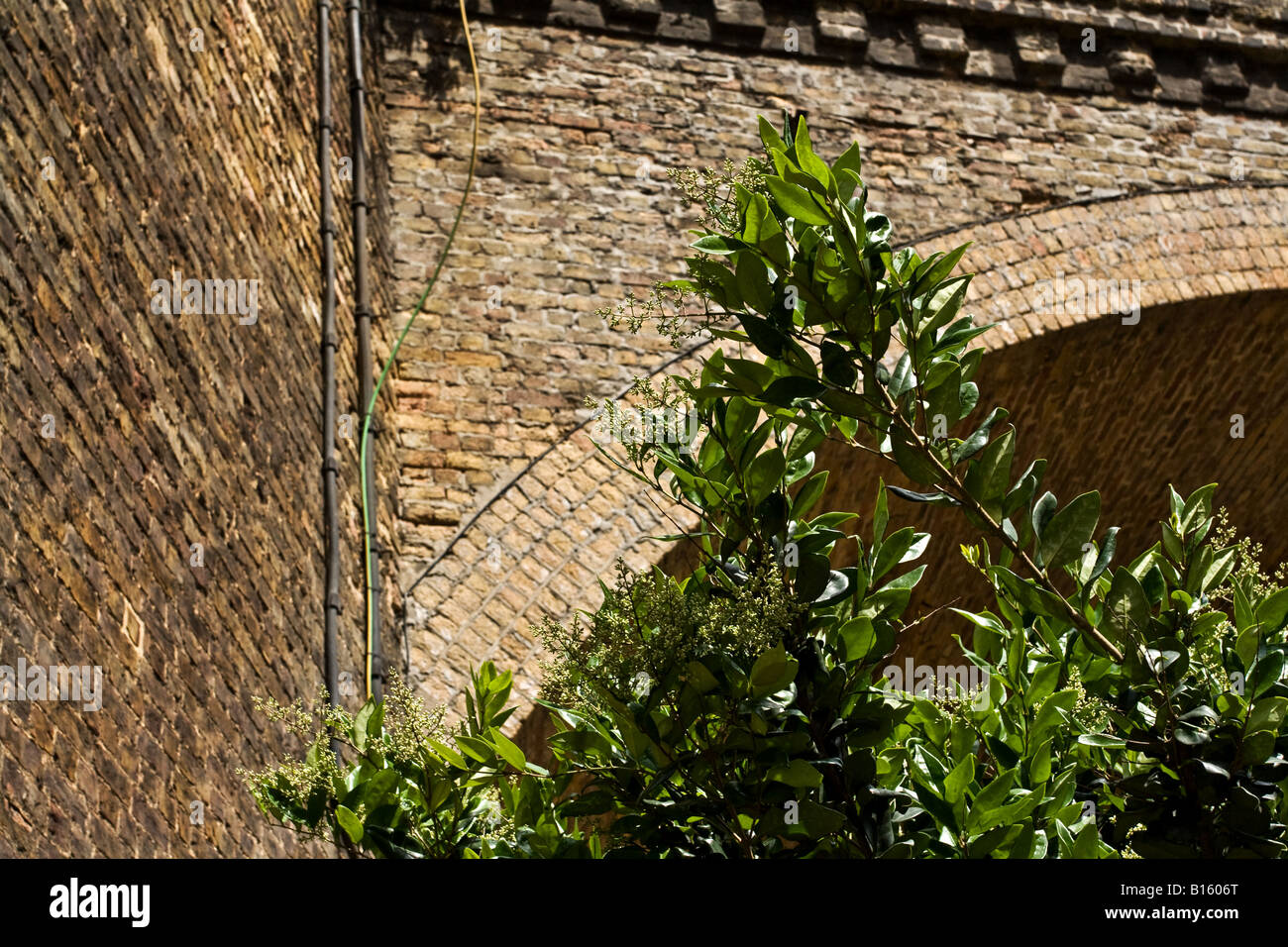 Plants in front of old brick railway arch. - Stock Image