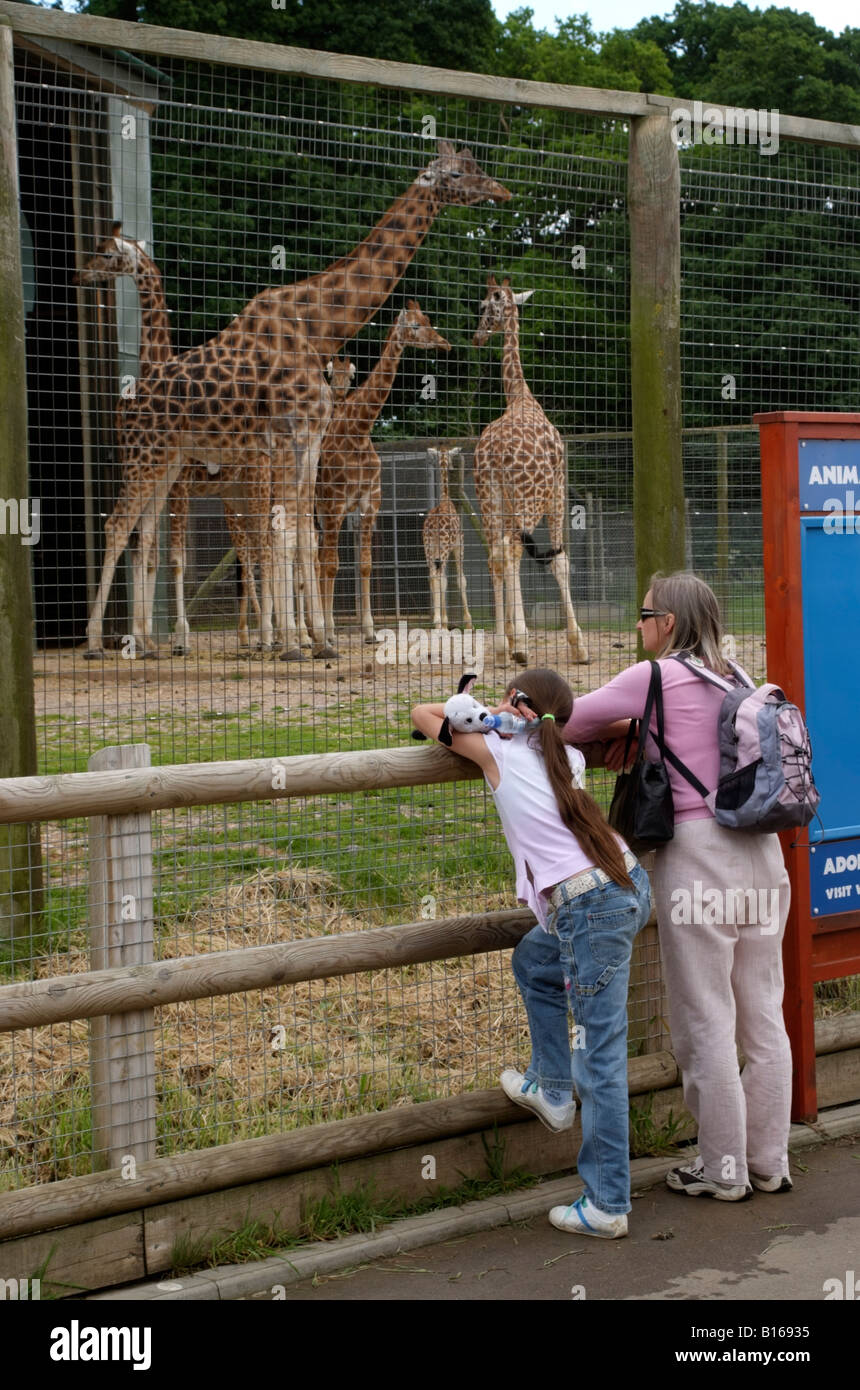Giraffe enclosure and visitors at Marwell Zoo near Winchester in Hampshire England UK - Stock Image