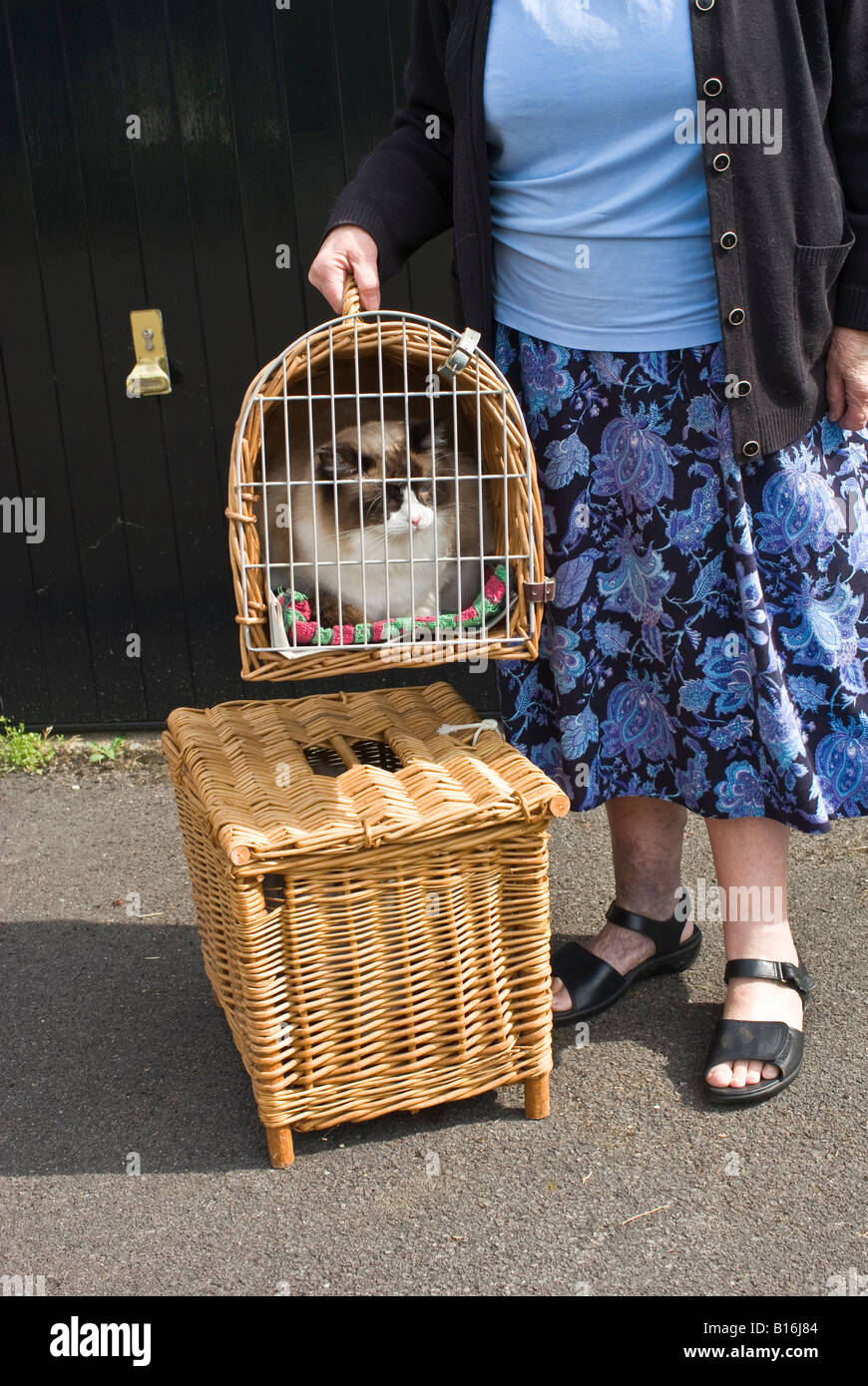 Ragdoll domestic cats in baskets ready for travel - Stock Image