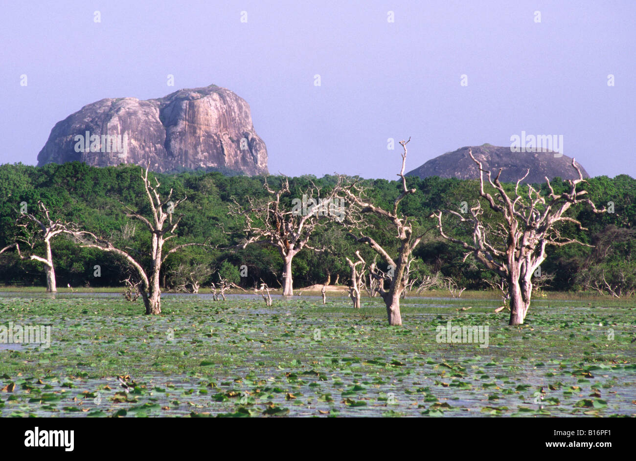 Lake with dead trees. Yala West National Park (Ruhuna), Sri lanka. - Stock Image