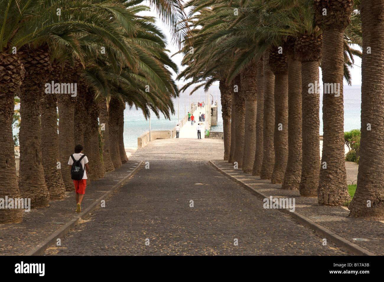 Palm-lined road leading to the Porto Santo pier on the Portuguese Atlantic island of Porto Santo. - Stock Image