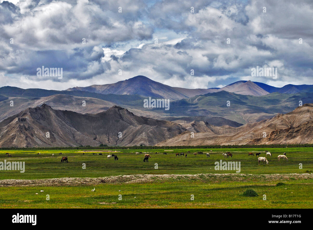China, Tibet, Gyantse, Horses in field Stock Photo