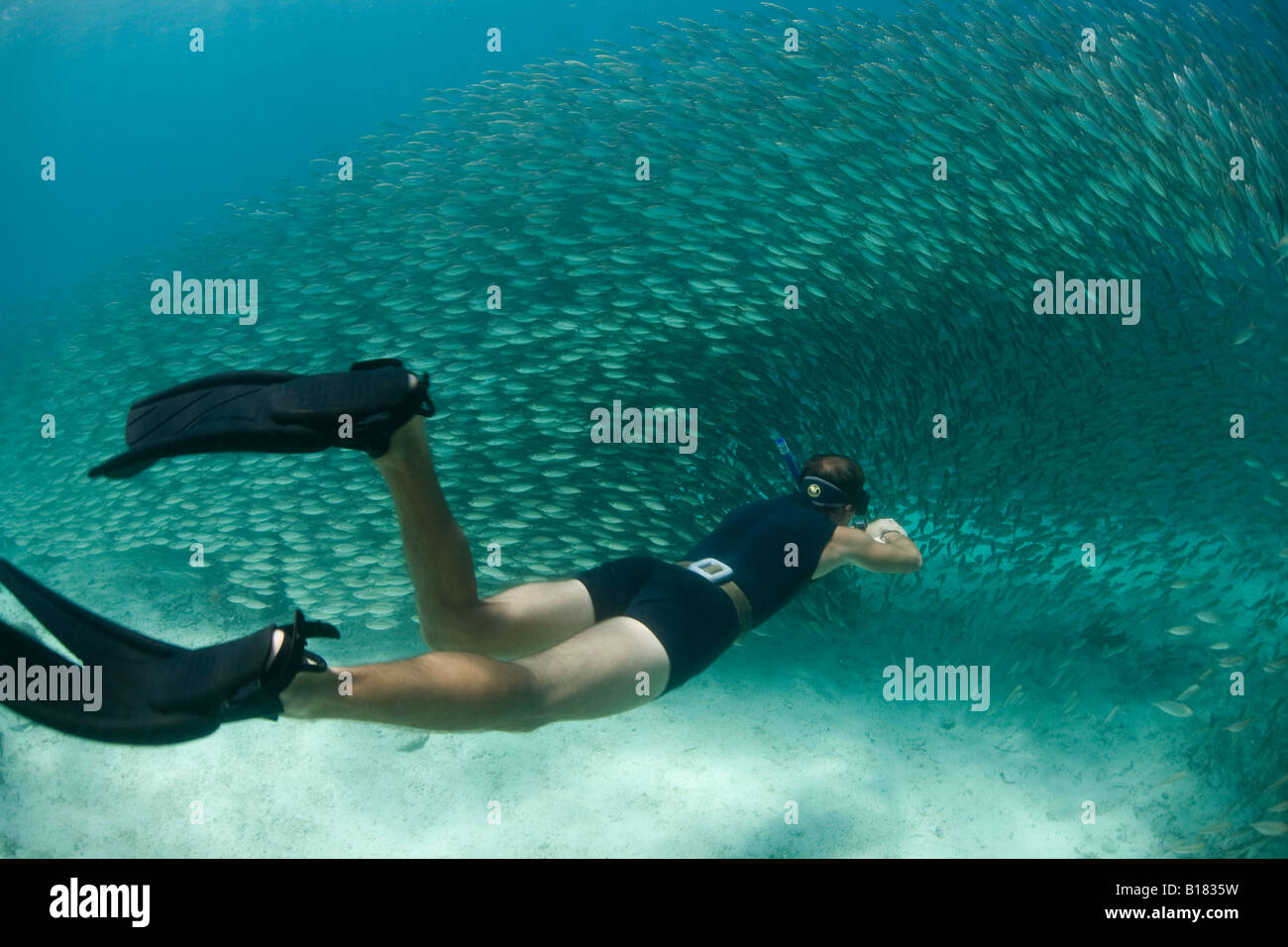 Freediver swims through massive school of fish Raja Ampat West Papua Indonesia - Stock Image