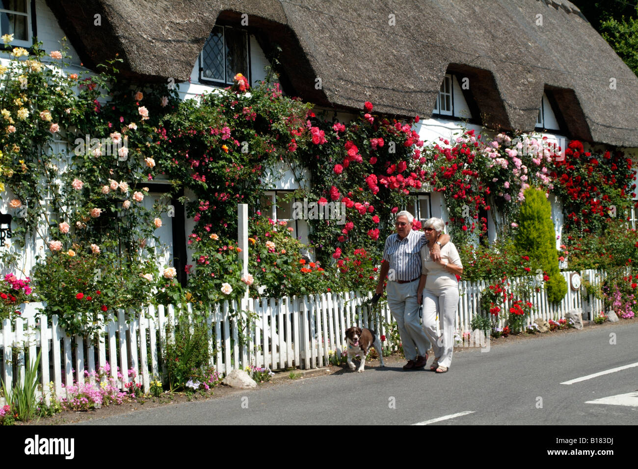 English country thatched cottage and roses in Hampshire England UK Elderly couple with their dog walking by - Stock Image