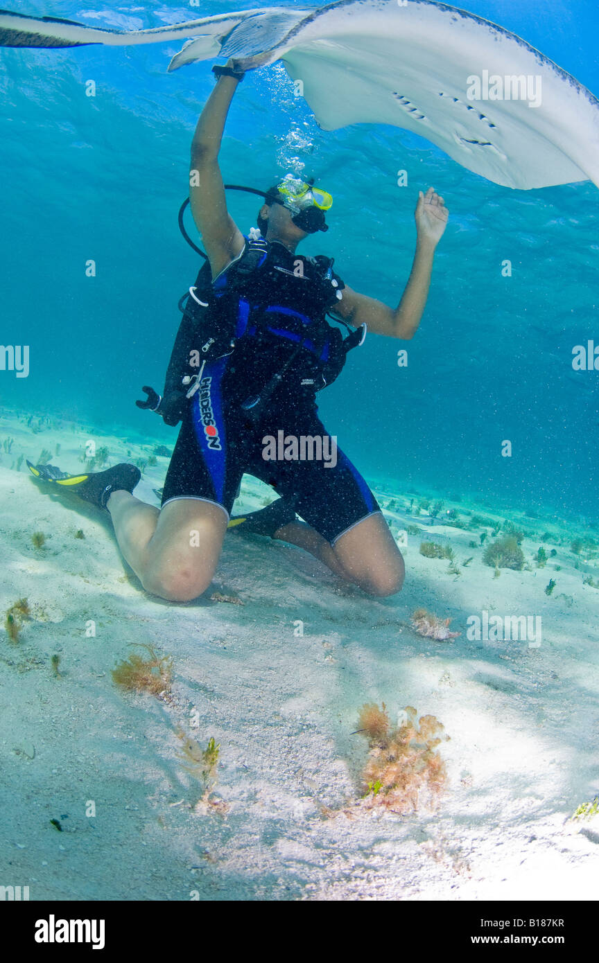 Diver and Southern Stingray Dasyatis americana Stingray City Caribbean Sea Cayman Islands - Stock Image