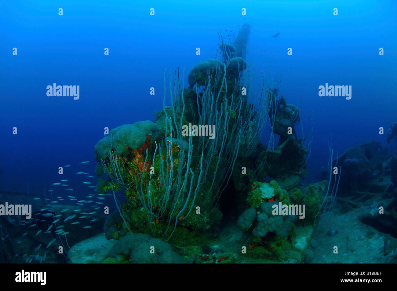 Corals cover Main gun of Wreck USS Lamson Bikini Atoll Marshall Islands - Stock Image