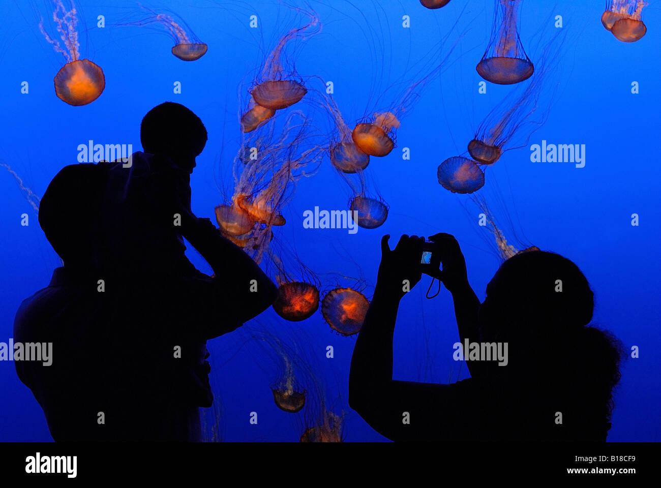 Visitors in Aquarium Monterey California USA - Stock Image