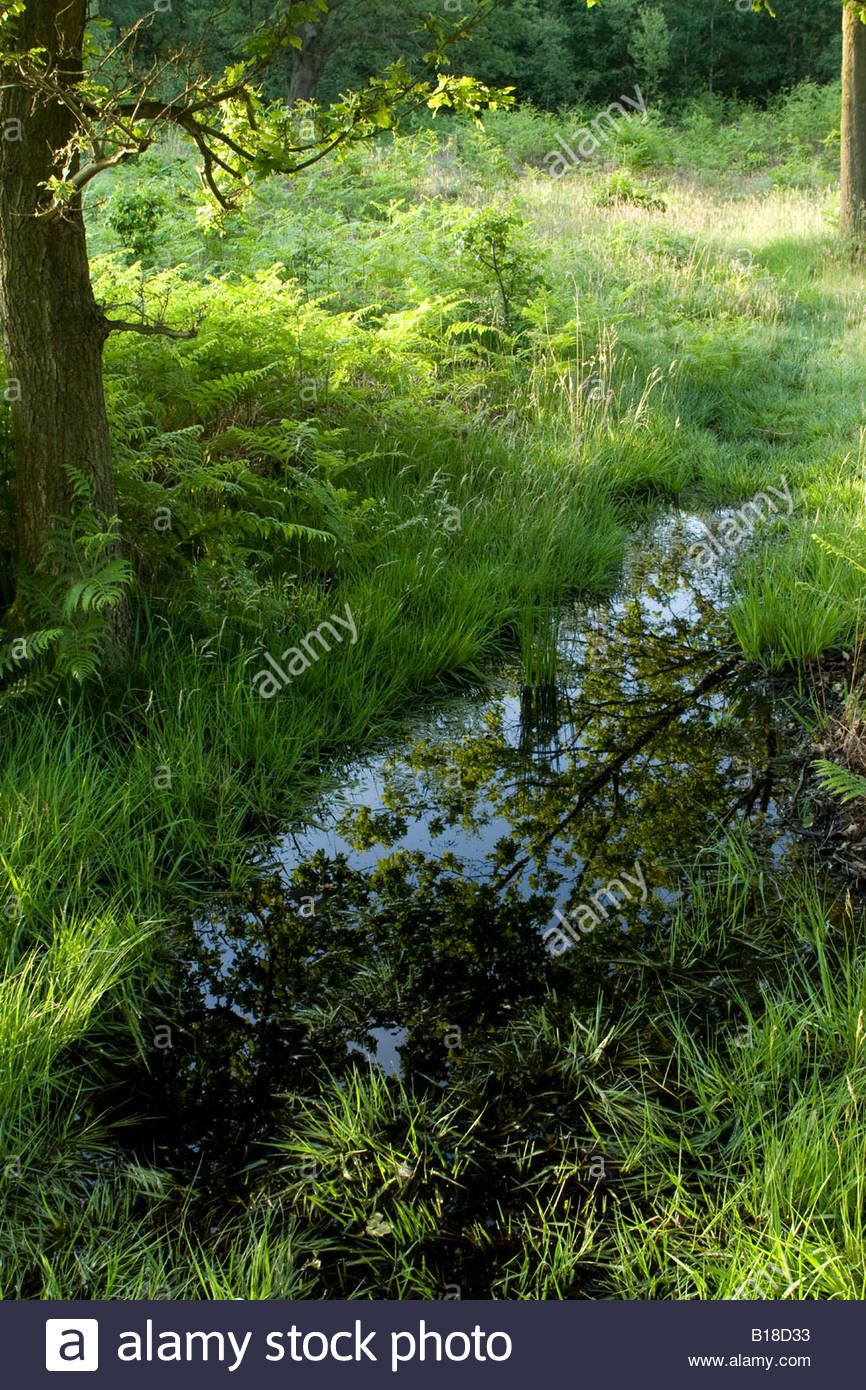 Flooded grassland, Essex, UK. Stock Photo