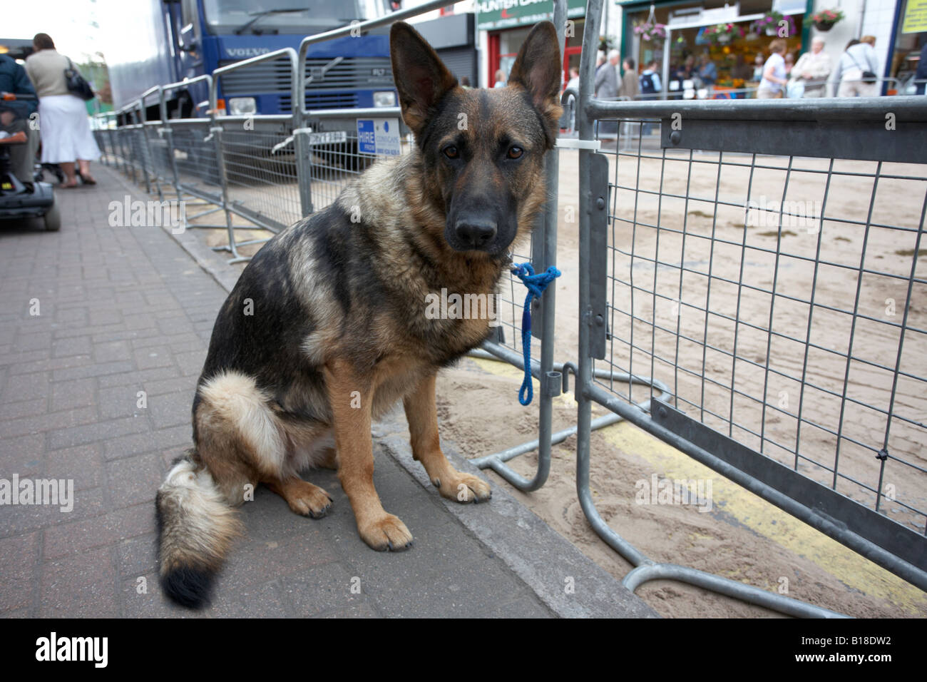 alsatian german shepherd dog tied to fence waiting for owner ballyclare northern ireland - Stock Image