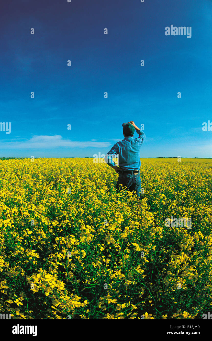 a farmer looks out over his bloom stage canola, Manitoba, Canada - Stock Image