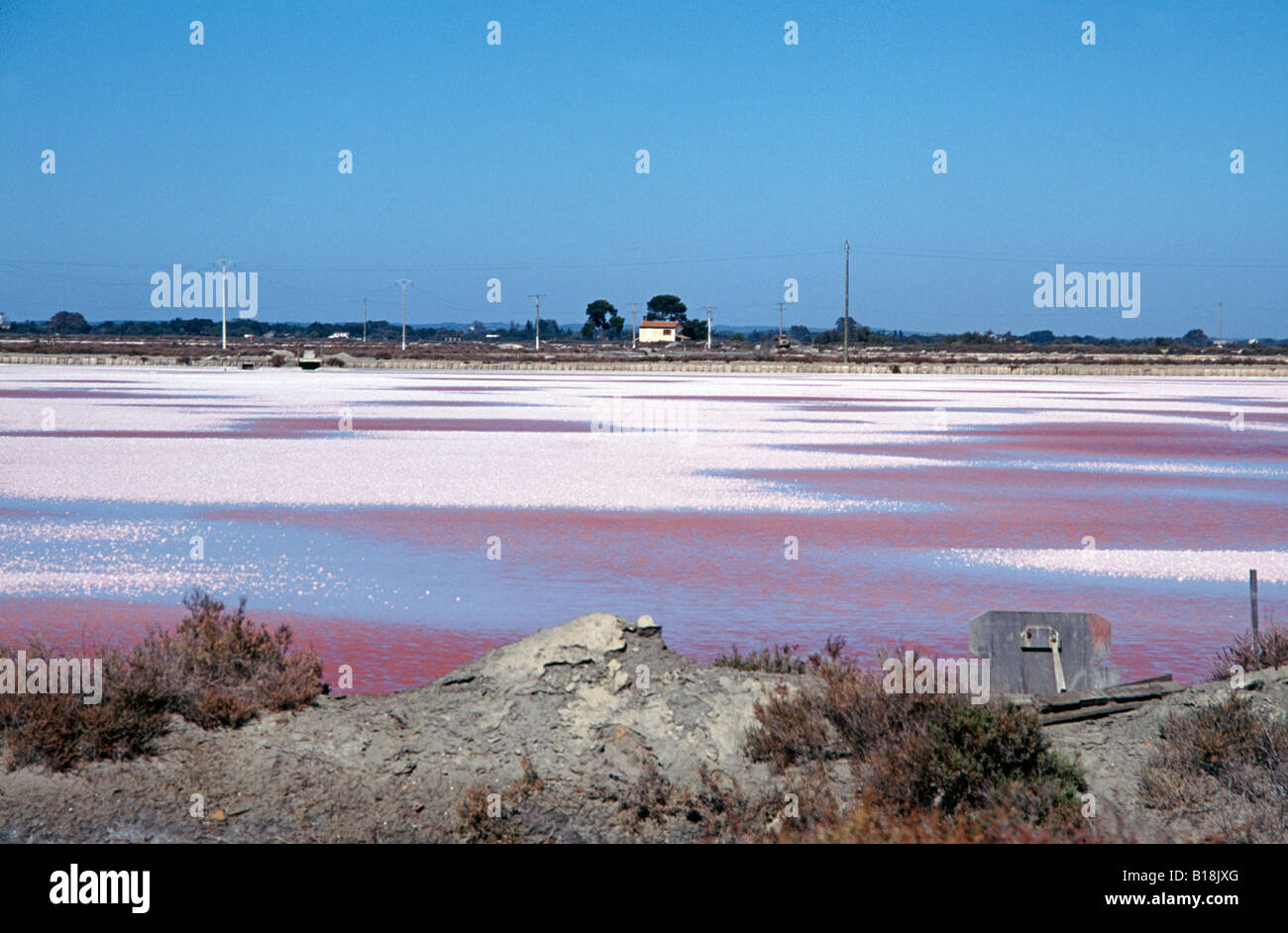 Salt flats at Les Salins, Aigues Mortes ,South of France tinged pink with micro-organisms that are eaten by fish - Stock Image
