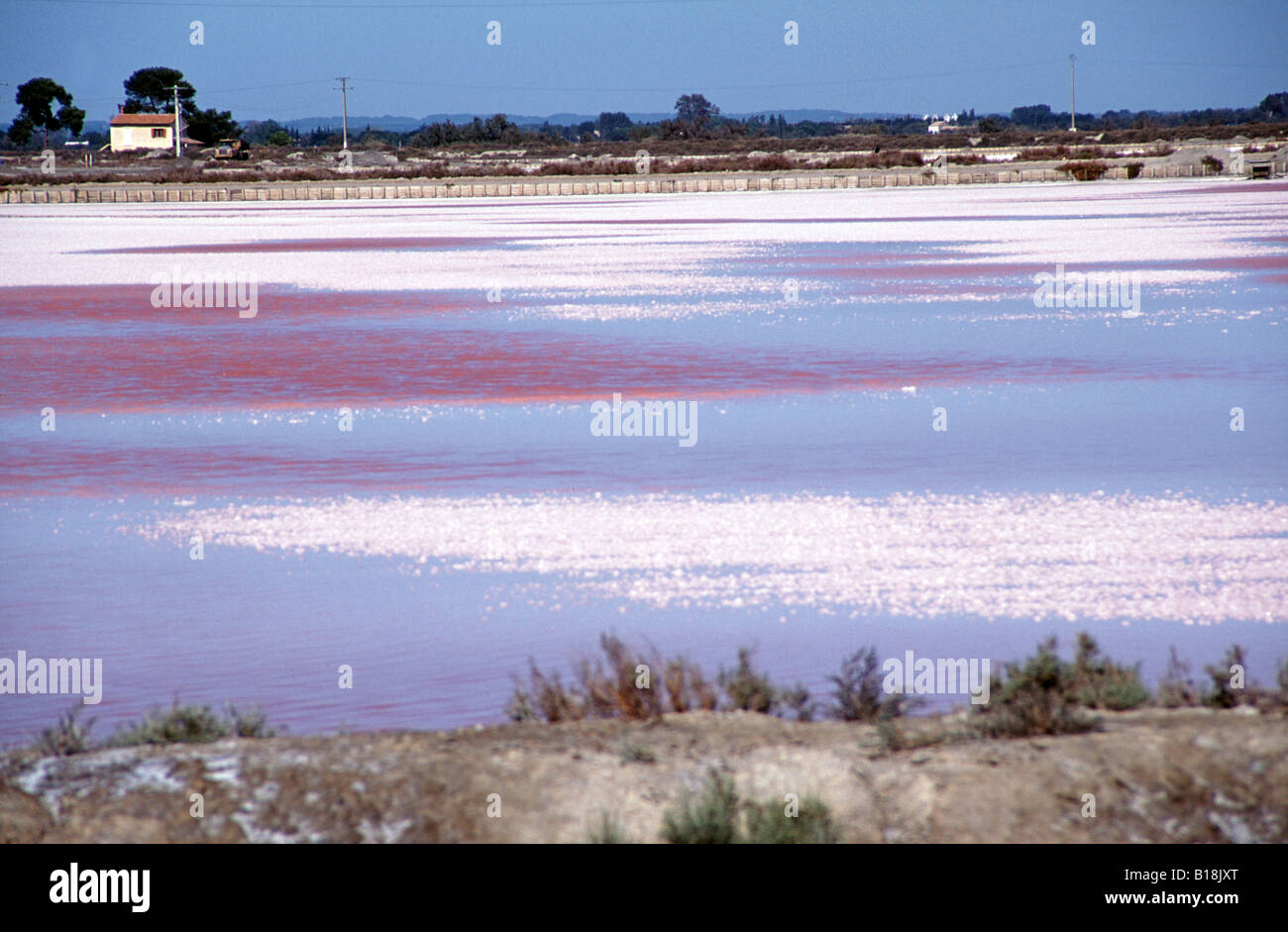 Salt flats at Les Salins, Aigues Mortes ,South of France tinged pink with micro organisms that are eaten by fish - Stock Image