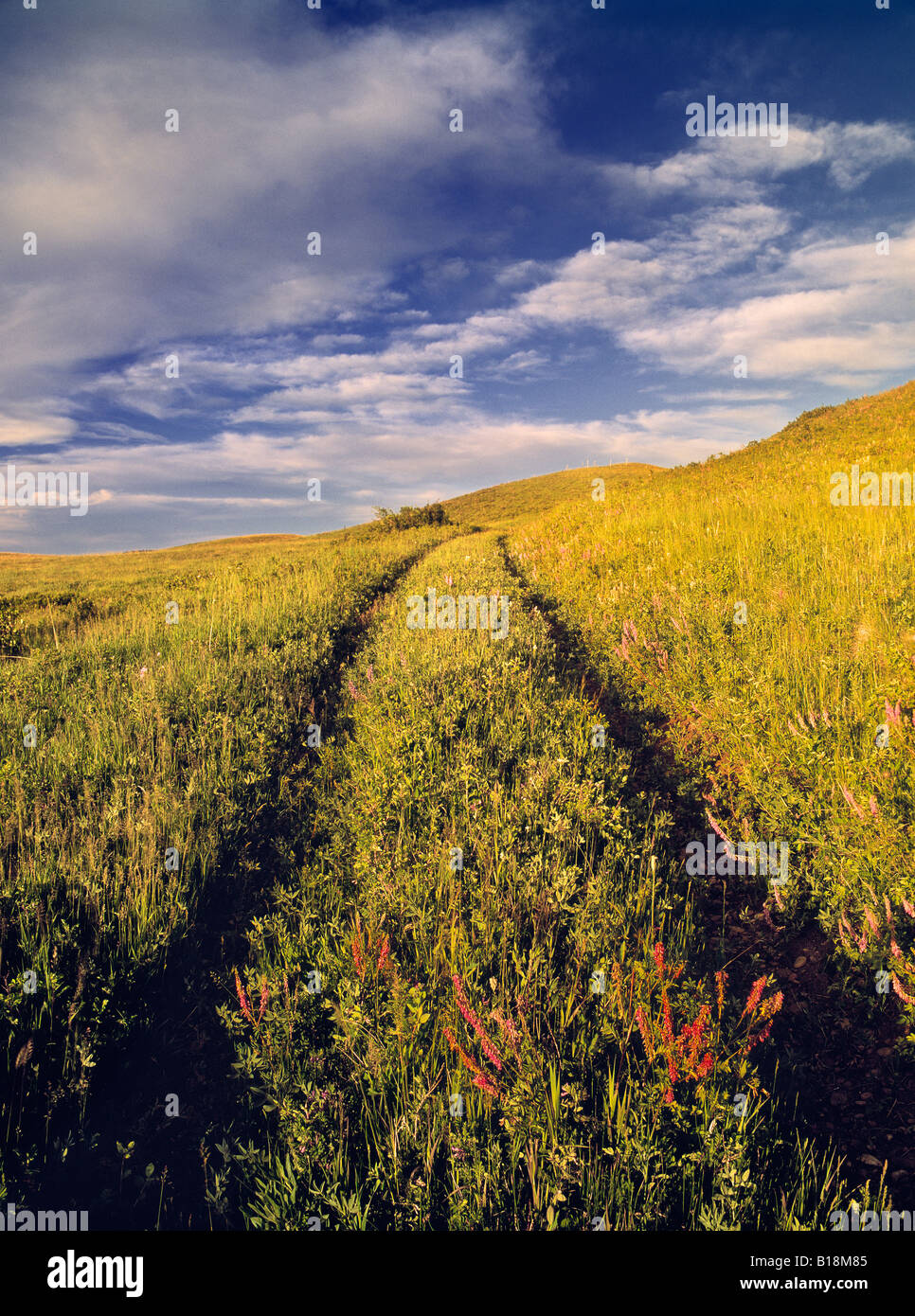 Truck Trail through pastureland, Cypress Hills, Saskatchewan, Canada - Stock Image