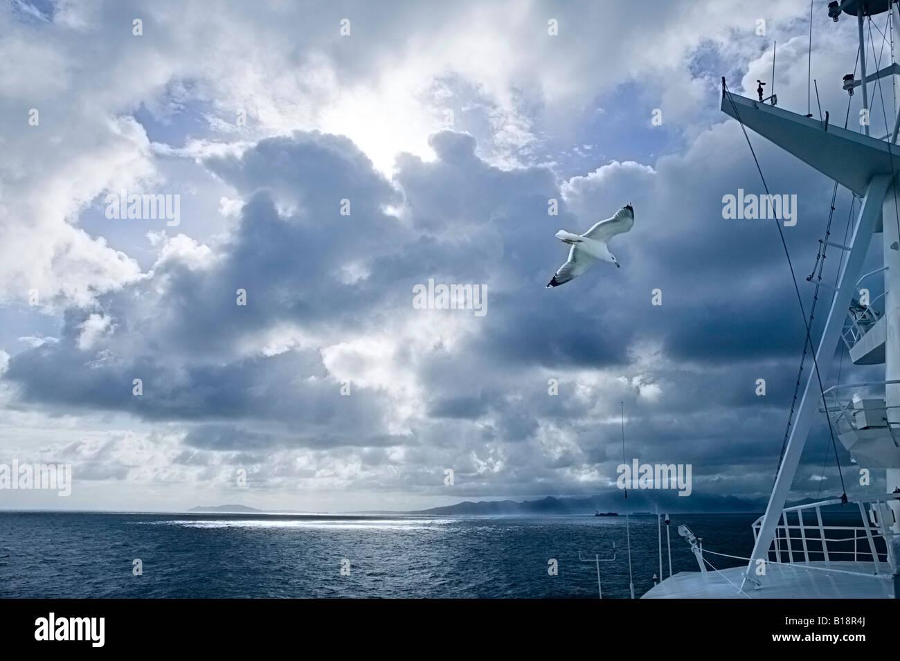 Lonesome seagull flying in Winter light on Gibraltar Straits - Stock Image