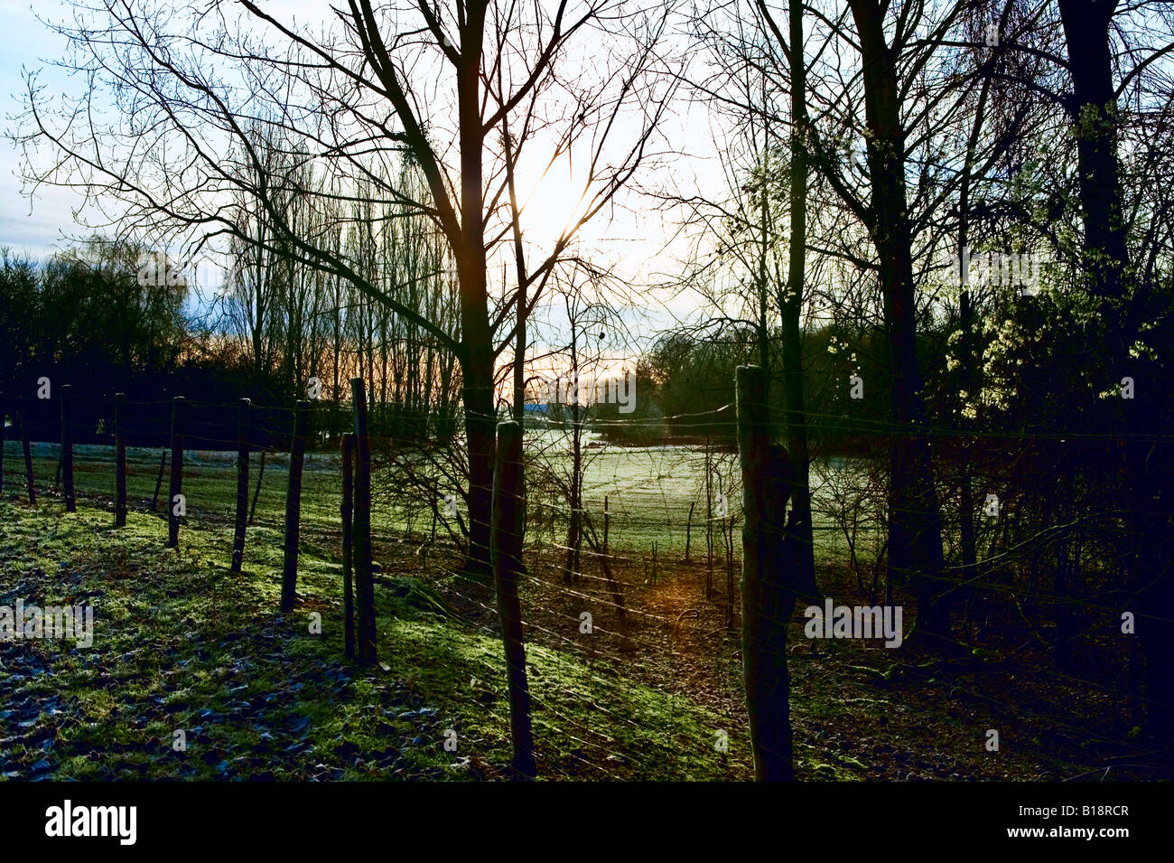 sun rising through trees and fence - Stock Image