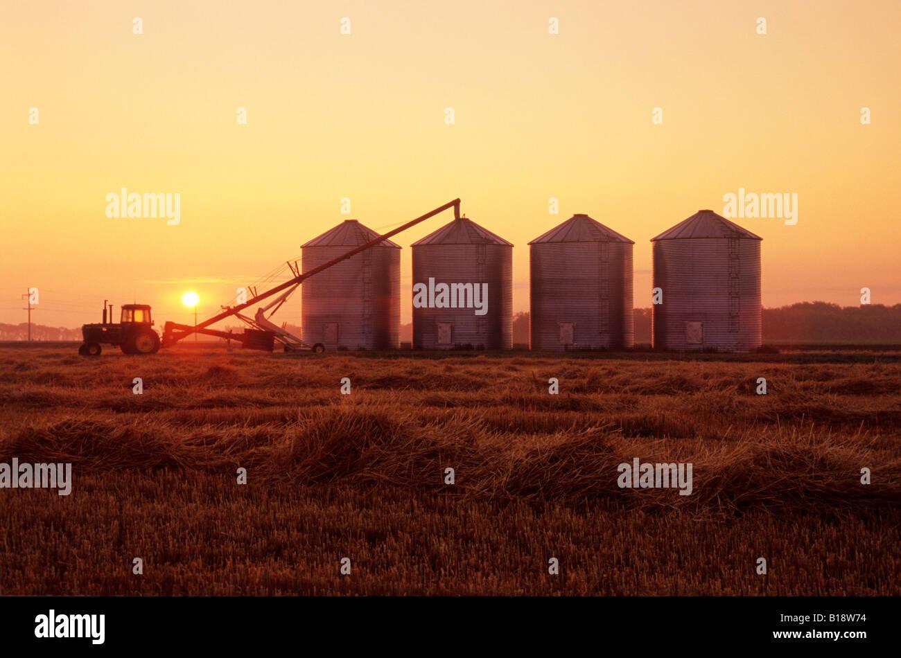 Filling Crop storage bins with winter wheat, Carey, Manitoba, Canada. - Stock Image